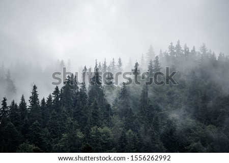 Misty foggy mountain landscape with fir forest and copyspace in vintage retro hipster style #1556262992