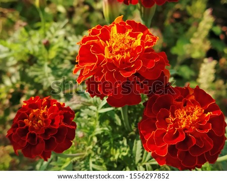Download HD Flowers Background Image Wallpaper Stock. Flowers Stock Photos & Flowers Stock Images.