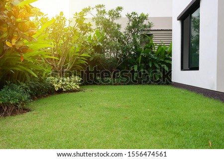lawn landscaping with green grass turf in garden home Royalty-Free Stock Photo #1556474561