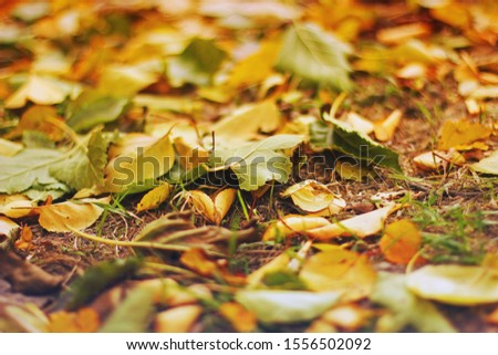 Leaves on the ground. Background of leaves #1556502092