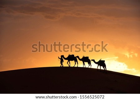 The beauty of the sand dunes in the Sahara Desert in Morocco. The Sahara Desert is the largest hot desert and one of the harshest environments in the world. #1556525072
