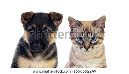 Two beautiful pets isolated on a white background #1556552249