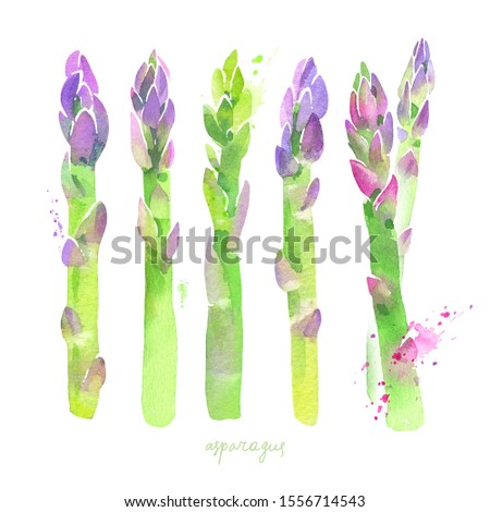 Fresh asparagus set. Hand drawn watercolor illustration #1556714543