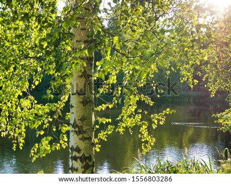 Nature view in Aulanko with a birch tree on the first plan and a lake on background #1556803286