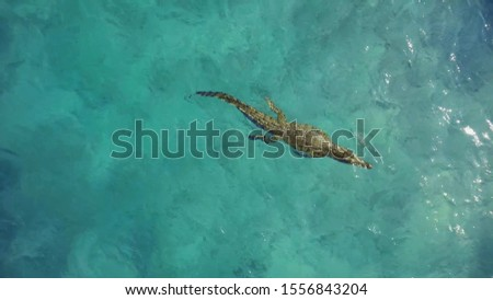 Dangerous and scary crocodile swims in the ocean. Concept undersea world. #1556843204