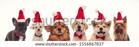 happy christmas dogs in a line wearing santa hats on white background