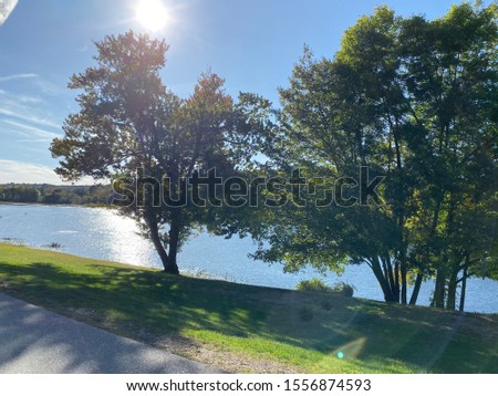 sun and trees by lake #1556874593