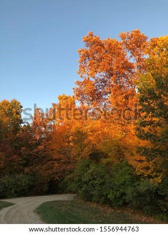 Fall season tree pictures to use able to be for background or for any use. #1556944763
