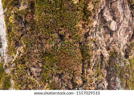 Close-up of the bark of an old tree covered with moss #1557029510