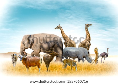 African safari and Asian animals in the theme illustration, filled with many animals, a white border image #1557060716
