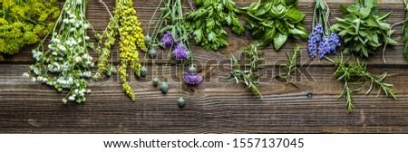 Collection of herbs, fresh garden herb on wooden background #1557137045