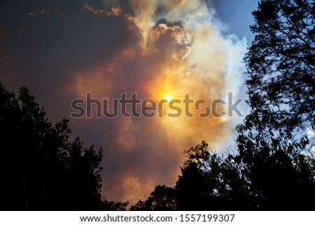 Australian bushfire: trees silhouettes and smoke from bushfires covers the sky and glowing sun barely seen through the smoke. Catastrophic fire danger, NSW, Australia #1557199307