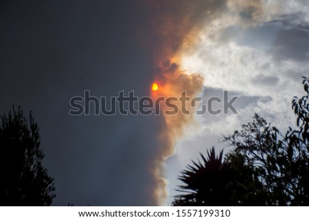 Australian bushfire: trees silhouettes and smoke from bushfires covers the sky and glowing sun barely seen through the smoke. Catastrophic fire danger, NSW, Australia Royalty-Free Stock Photo #1557199310