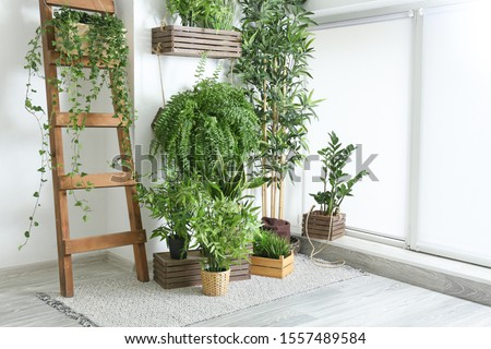 Green houseplants near white wall in room Royalty-Free Stock Photo #1557489584