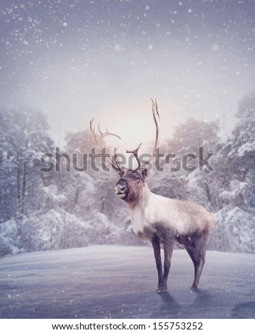 Reindeer standing in the snow Royalty-Free Stock Photo #155753252