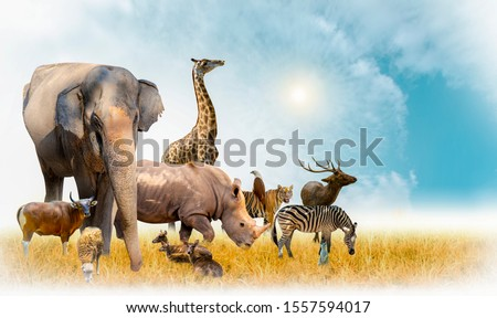African safari and Asian animals in the theme illustration, filled with many animals, a white border image Royalty-Free Stock Photo #1557594017