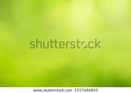 Leaf background on a green background #1557686843