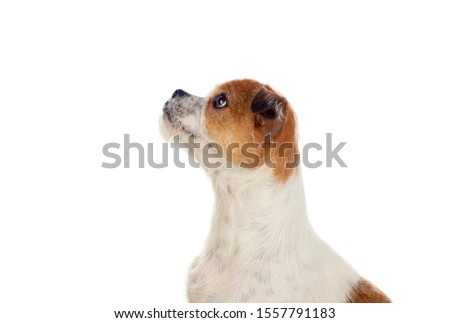 Small dog isolated on a white background #1557791183