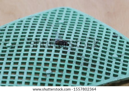 Fly swatter with a fly. Dead fly stuck on a fly swatter. #1557802364