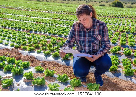 Young technical woman working in a lettuce field with a folder looking at camera. agriculture concept. #1557841190