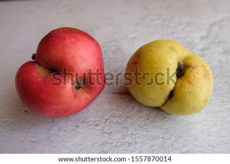 An ugly organic fruit - two strangely shaped apples on a gray background. Horizontal orientation. Buying imperfect foods is a way to deal with food waste. #1557870014