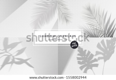 Set of shadow background overlays. Realistic Shadow mock up scenes. Transparent shadow of tropical leaves. Vector illustration Royalty-Free Stock Photo #1558002944
