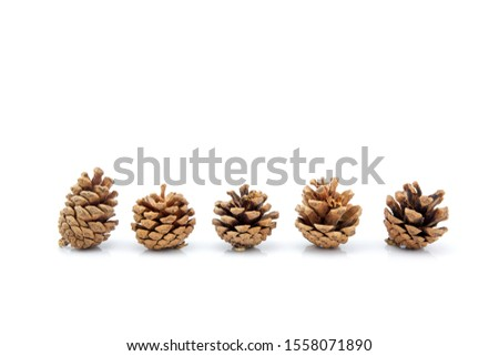 image group of pinecone isolated on white background, set of pine cone tree is symbol decoration Christmas holiday, object nature concept. Royalty-Free Stock Photo #1558071890