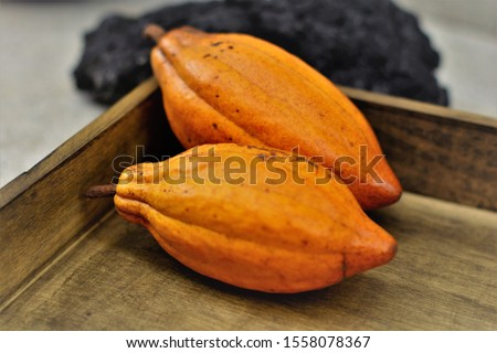 Healthy Ripe Fruits of Theobroma Cacao on Wooden Tray #1558078367