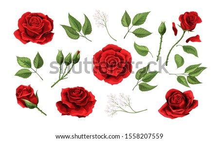 Red roses hand drawn color set. Black line rose flowers isolated on white background. Vector colored elements illustration for happy Valentines day postcards.