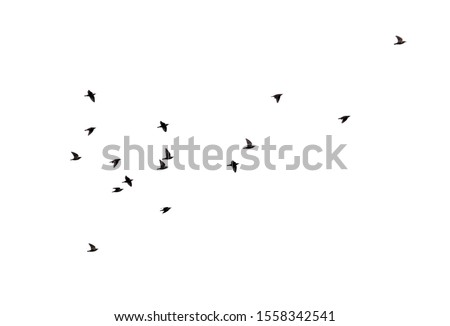 Flock of birds isolated on white background.