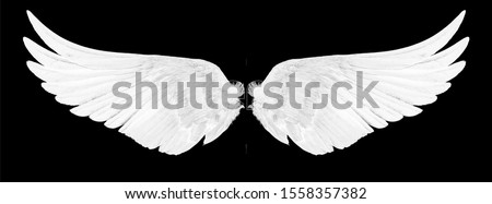 white wings isolated on a black  Royalty-Free Stock Photo #1558357382