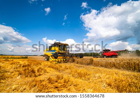 Agriculture machine harvesting crop in fields, Special technic in action. Agricultural concept. Ripe crop panorama. Cereal gathering. Heavy machinery, blue sky above field. #1558364678