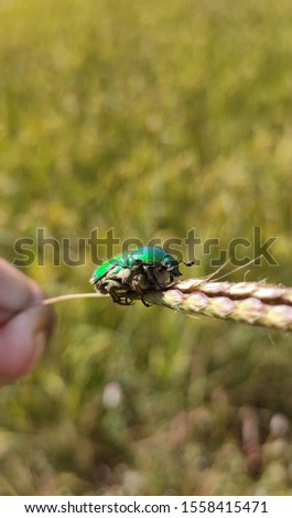 Unique insect pic in he quality