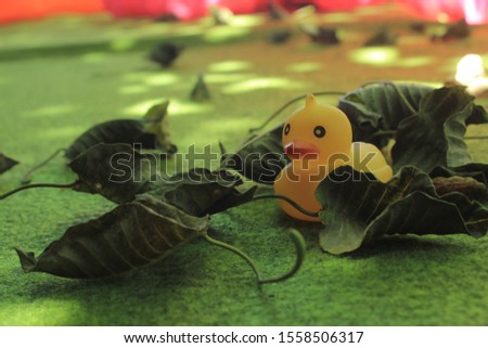 this photo is  rubber duck #1558506317