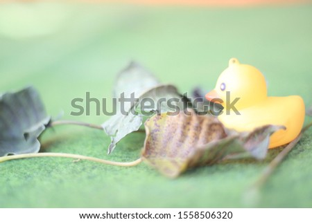 this photo is  rubber duck #1558506320