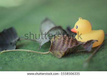 this photo is  rubber duck #1558506335