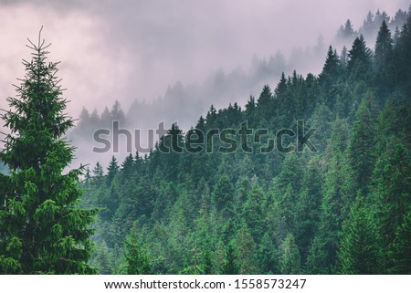 Misty foggy mountain landscape with fir forest and copyspace in vintage retro hipster style #1558573247