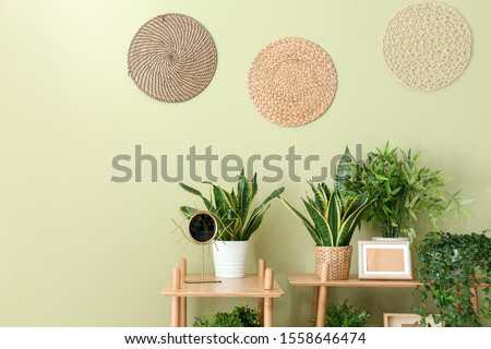 Shelves with green houseplants near color wall Royalty-Free Stock Photo #1558646474