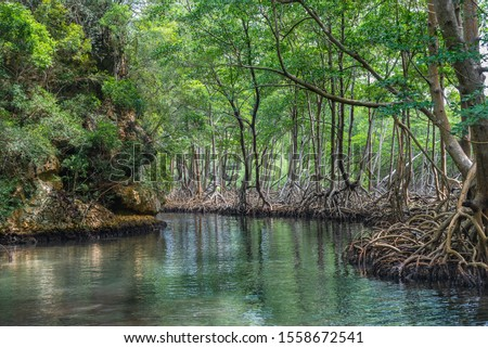 Los Haitises National Park in Samana. Dominican Republic. Mangroves, caves, tropical forest, tropical birds and manatees. Small islets where birds as frigates and pelicans nest.