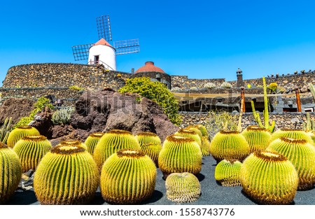 Travel concept. Amazing view of tropical cactus garden (Jardin de Cactus) in Guatiza village. Location: Lanzarote, Canary Islands, Spain. Artistic picture. Beauty world.