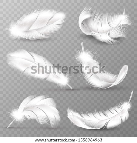 Realistic white feathers. Birds plumage, falling fluffy twirled feather, flying angel wings feathers. Realistic isolated easy goose animal plume logo set