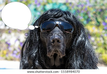 Funny picture with bubble idea dog labrador with sunglasses and long hair.
