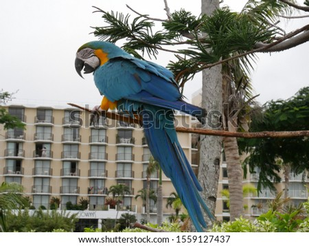 Saipan, USA-December 2016: Colorful parrot perched on a tree outside a hotel.