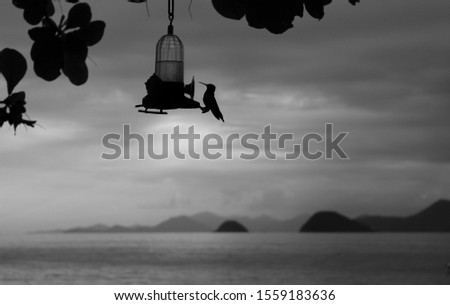Bird in foreground with ocean and mountain in the background black and white photo
