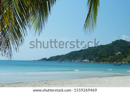 View of the sea and the beach, with a sprig of palm trees, on a sunny day. #1559269469