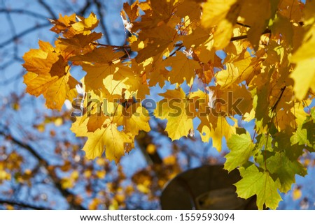 Sunny autumn - the pictures were taken in Krakow.