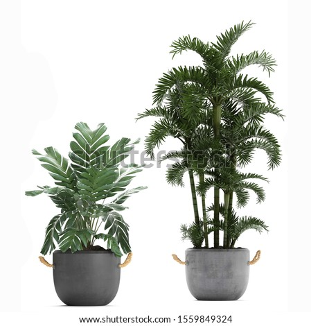 3D render of a Chamaedorea elegans palm in a pot on a white background  #1559849324