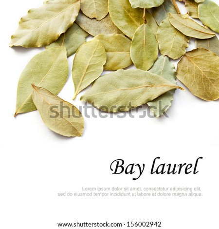 Bay laurel leaves on white background #156002942