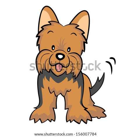 Brown Yorkshire terrier puppy isolated