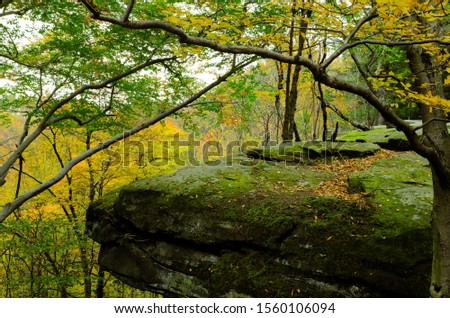 Mountain trail inside the forest. Beautiful scenic view,landscape. Roots of trees and stones on path in wild wood.Peninsula Ohio . #1560106094